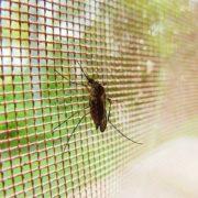 Toldos Antolín Instalación de mosquiteras para su casa